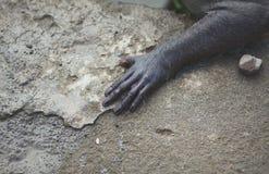 Рука обезьяны Стоковые Изображения