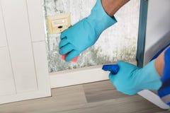 Рука персоны очищая Moldy стену Стоковые Фотографии RF
