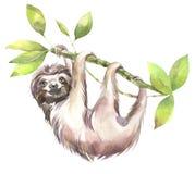 Рука покрасила иллюстрацию животных акварели Милая усмехаясь лень в зеленом цвете иллюстрация штока
