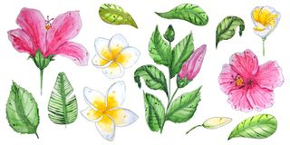 Рука покрасила цветки акварели тропические иллюстрация вектора