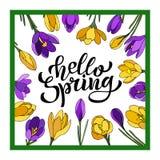 Рука помечая буквами весну здравствуйте с крокусами Иллюстрация в стиле нарисованном рукой бесплатная иллюстрация