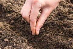 Рука приземляясь малые семена в земле стоковые изображения rf