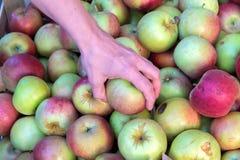 Рука принимает яблоко стоковое изображение