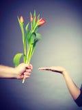 Рука при тюльпан и ладонь показывая космос экземпляра Стоковое фото RF