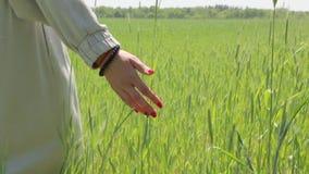 Рука пшеничного поля девушки видеоматериал