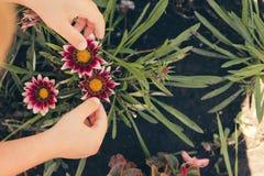 Рука ребенка лаская красные цветки Стоковые Фотографии RF