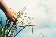 Рука ребенка касаясь рису стоковая фотография