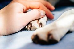 рука собаки держа людскую лапку Стоковые Изображения RF