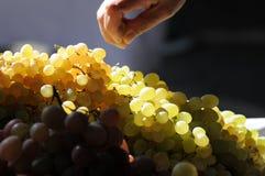 Рука с виноградинами стоковое изображение rf