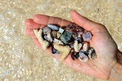 Рука с различные seashells и камни на море приставает предпосылку к берегу в солнечной погоде лета стоковое изображение rf