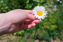 Рука с стоцветом на зеленой предпосылке Стоковое Фото