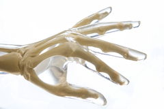 Рука фантома рентгеновского снимка Стоковые Фото