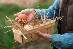Рука фермера держа свежее коричневое яичко курицы и другие яичка в a стоковые фото