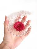 рука цветка коробки предпосылки над красной белизной Стоковые Изображения