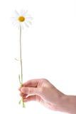 рука цветка стоцвета держа женщин одного Стоковые Изображения RF