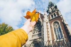 Рука человека держа желтые лист стоковые фотографии rf