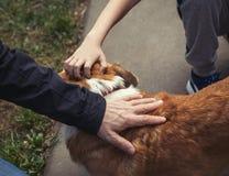 Рука человека и рука ребенка штрихуют собаку схематическо Заботить для животных стоковое фото rf