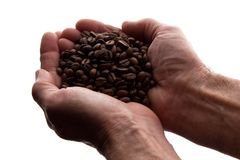 Рука человека пригорошня кофейных зерен - силуэт стоковое фото