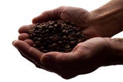 Рука человека пригорошня кофейных зерен - силуэт стоковые изображения