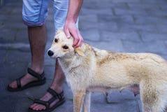 Рука штрихуя собаку Стоковое Изображение