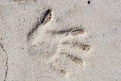 рука beton Стоковая Фотография