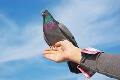 рука dove Стоковое Изображение RF