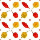 Рука dra акварели листьев рябины и березы винтажная Стоковые Фото