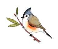 Рука Painted иллюстрации акварели птицы Titmouse изолированный на белой предпосылке Стоковое фото RF