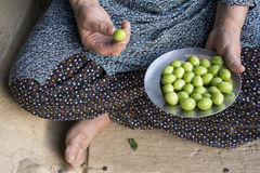 Рука ` s женщины держа стальную пластину зеленой сливы Стоковые Изображения RF