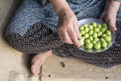 Рука ` s женщины держа стальную пластину зеленой сливы Стоковая Фотография RF