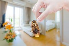 Рука ` s женщины держа таракана на предпосылке спальни Стоковые Фотографии RF