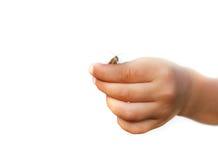 рука s кузнечика ребенка стоковые изображения
