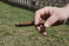 Рука ` s человека держа горящую сигару, с запачканными лужайкой и a стоковые изображения