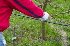 Рука ` s человека засует удобрение Важные шаги для того чтобы позаботиться о яблоневый сад Стоковые Фото