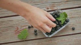 Рука ` s человека принимает несколько ягоды черной смородины видеоматериал