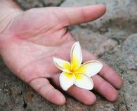 Рука ` s человека с экзотическим цветком, Стоковое Изображение RF