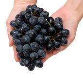руки виноградин Стоковое Изображение
