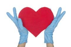 Руки в голубых медицинских перчатках держат сердце Стоковое Изображение RF