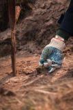 Руки в перчатках засаживая малое дерево пускают ростии в почве Стоковое Изображение RF