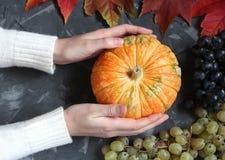 Руки держат тыкву на конкретной предпосылке взгляд сверху Стоковое Фото