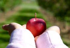 Руки держа вне яблоко стоковое изображение rf