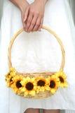 руки держа женщину солнцецвета s Стоковое Фото