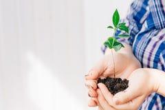 Руки держа малый росток зеленого растения Стоковые Изображения RF