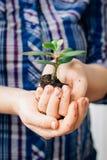 Руки держа малый росток зеленого суккулентного завода Стоковое Изображение RF