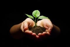 Руки держа почву sapling стоковые фотографии rf