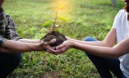 2 руки держа совместно молодой дерева стоковые изображения rf