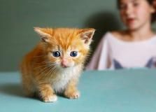 Руки девушки держат меньшего красного котенка меха Стоковая Фотография