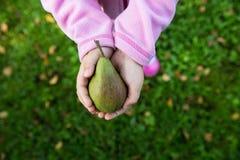 Руки держа грушу Стоковые Фото