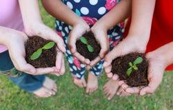 Руки держа деревце в поверхности почвы Стоковая Фотография RF