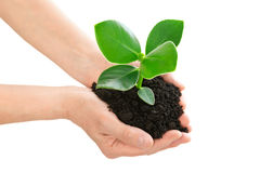 Руки держа концепцию экологичности зеленого растения Стоковое фото RF
